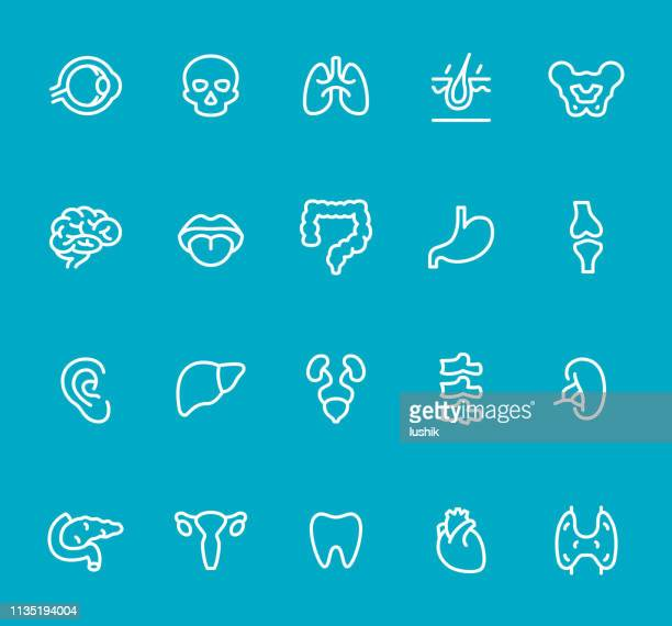 internal organ - line icon set - colon stock illustrations