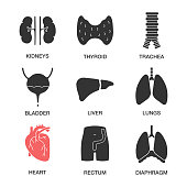 Internal organs icons