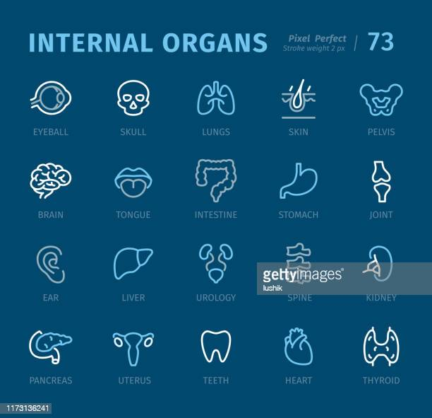 internal organs - outline icons with captions - colon stock illustrations