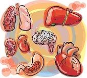 internal organs sketch set