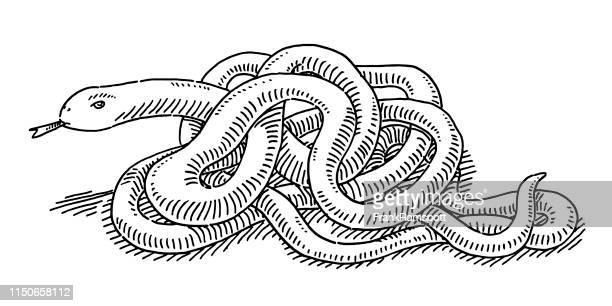 ilustrações, clipart, desenhos animados e ícones de desenho entrelaçado da serpente - réptil
