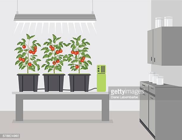 ilustrações, clipart, desenhos animados e ícones de iot hydroponic growing - produto local