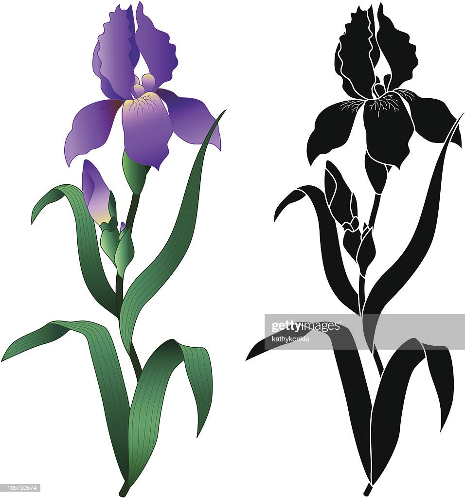 Iris vector line flower iris vector image vector illustration iris plant stock illustrations and cartoons getty images izmirmasajfo
