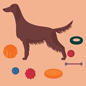 Irish setter with dog items. Pet care elements for walk and game. Training toys