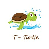 Isolated animal alphabet for the kids, T for Turtle