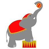 Isolated circus elephant