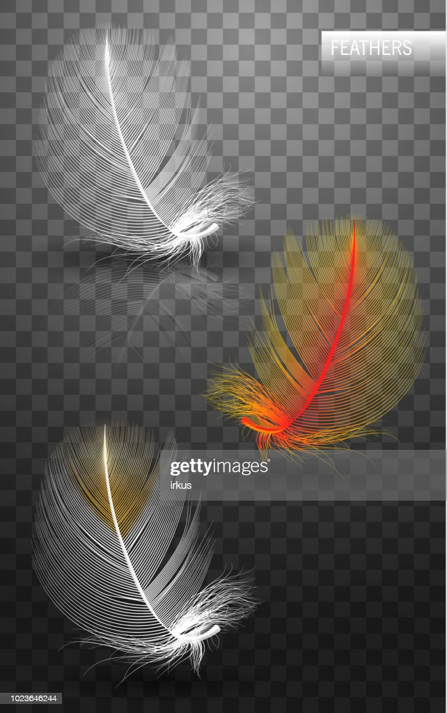 Isolated falling fluffy twirled feathers on transparent background in realistic style. Vector Illustration