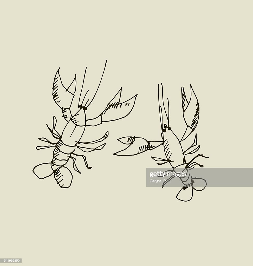 isolated lobster image.