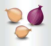 Isolated onion yellow and purple, photorealistic design with shadow, illustration on white background