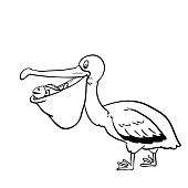 Isolated Pelican Cartoon-Vector Hand drawn Illustration