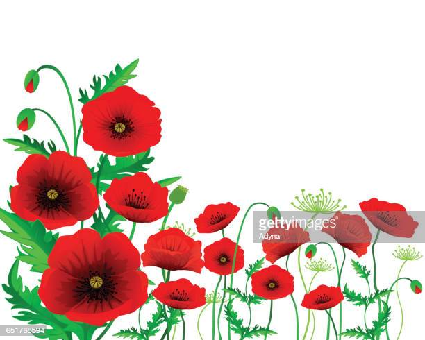 isolated poppy - poppy stock illustrations, clip art, cartoons, & icons