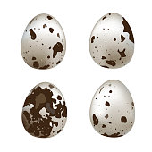 Isolated quail eggs. Vector set of quail eggs isolated on white background.