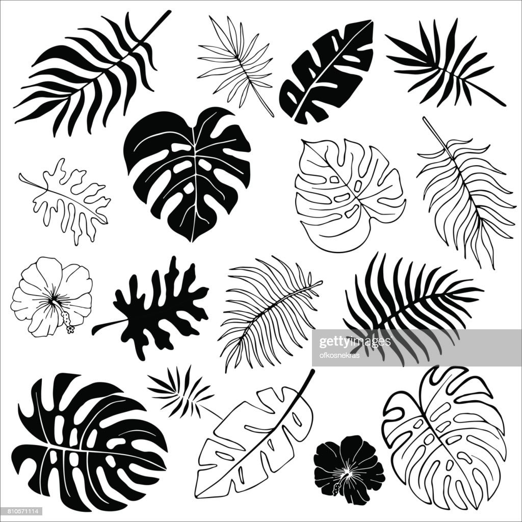 Isolated silhouettes of tropical palm leaves, jungle leaves