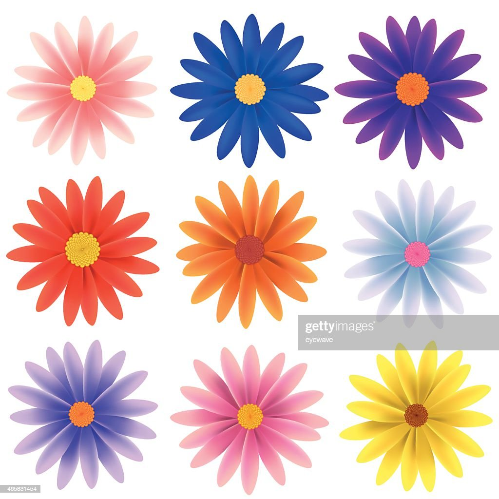 Isolated Vector Flower Collection