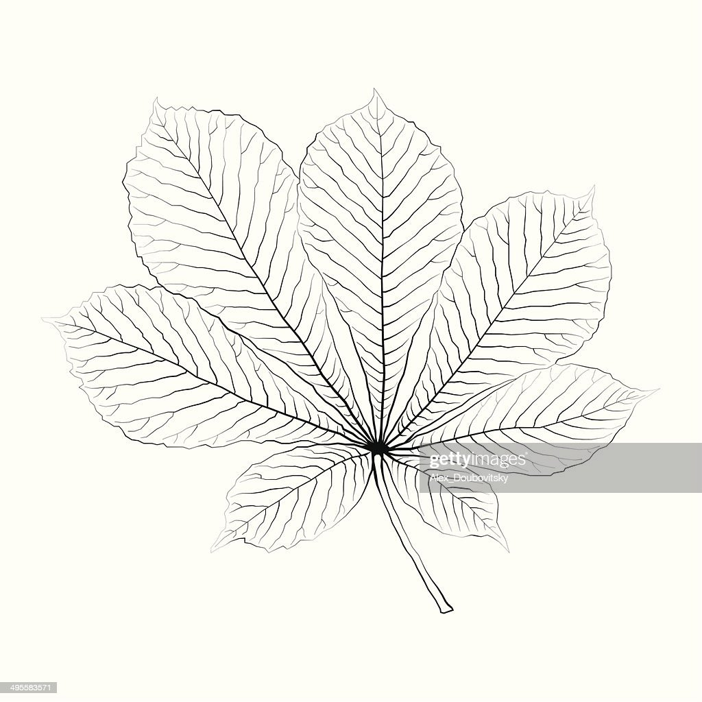 Isolated vector monochrome chestnut leaf.
