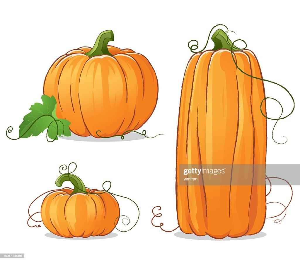 Isolated Vector Pumpkins Illustration