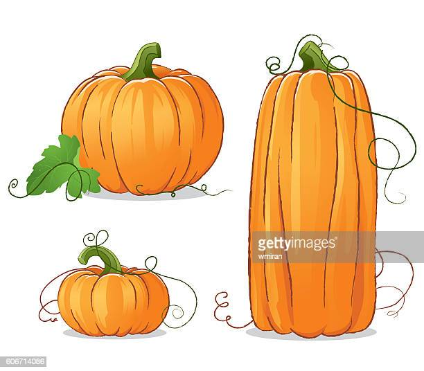 bildbanksillustrationer, clip art samt tecknat material och ikoner med isolated vector pumpkins illustration - pumpa