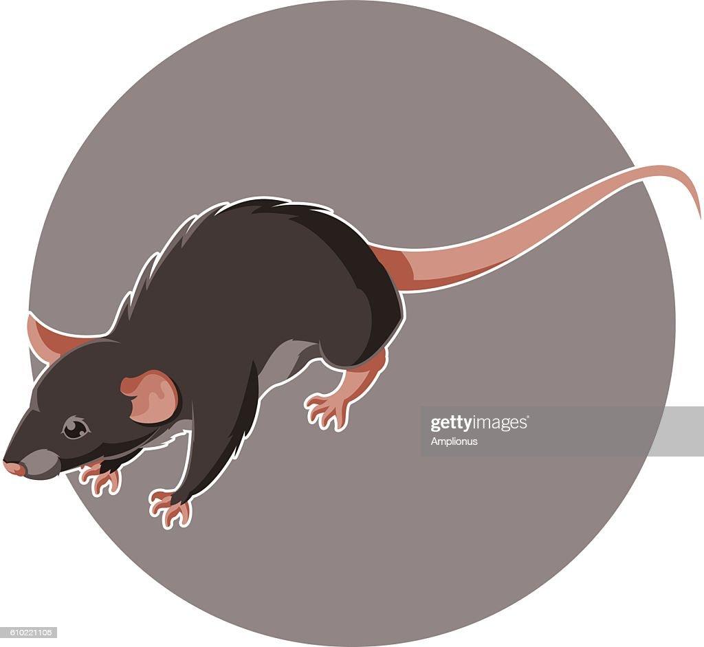 Isometric rat icon