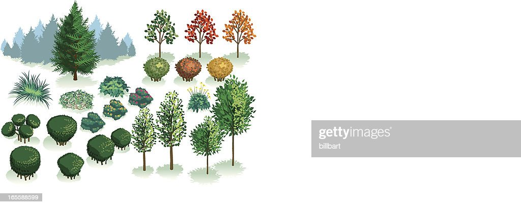 Isometric Set, Foliage of Plants, Trees and Bushes : stock illustration