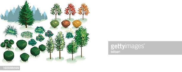 isometric set, foliage of plants, trees and bushes - coniferous tree stock illustrations, clip art, cartoons, & icons