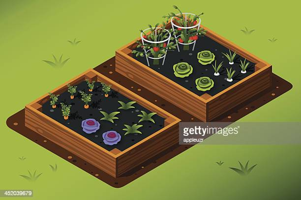 isometric vegetable garden - gardening stock illustrations
