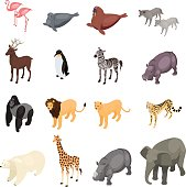 Isometric wild animals isolated on white background.
