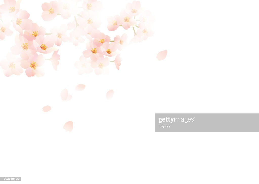 It is an illustration of Japanese cherry