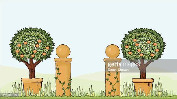 ilustrações de stock, clip art, desenhos animados e ícones de italianate jardim - laranjeira