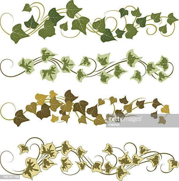 ivy - vine stock illustrations