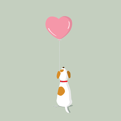 Jack Russell Terrier puppy with pink heart shape helium balloon - gettyimageskorea