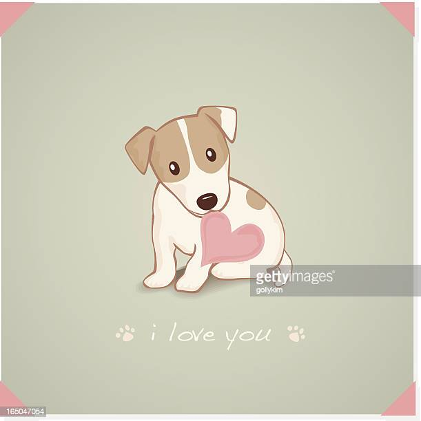 Jack Russell Terrier with heart Shape message in mouth