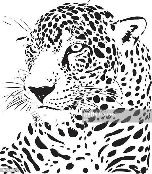 ilustraciones, imágenes clip art, dibujos animados e iconos de stock de jaguar ilustración b & w - jaguar