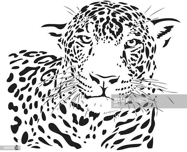 ilustraciones, imágenes clip art, dibujos animados e iconos de stock de jaguar (panthera onca) medio - jaguar