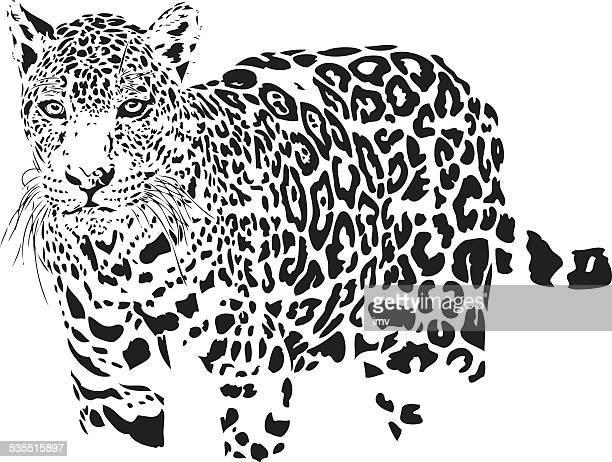 ilustraciones, imágenes clip art, dibujos animados e iconos de stock de jaguar medio - jaguar