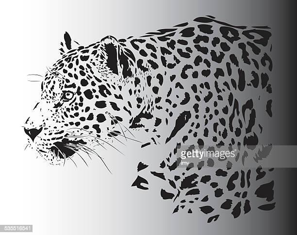 ilustraciones, imágenes clip art, dibujos animados e iconos de stock de jaguar retrato ilustración en b & w - jaguar
