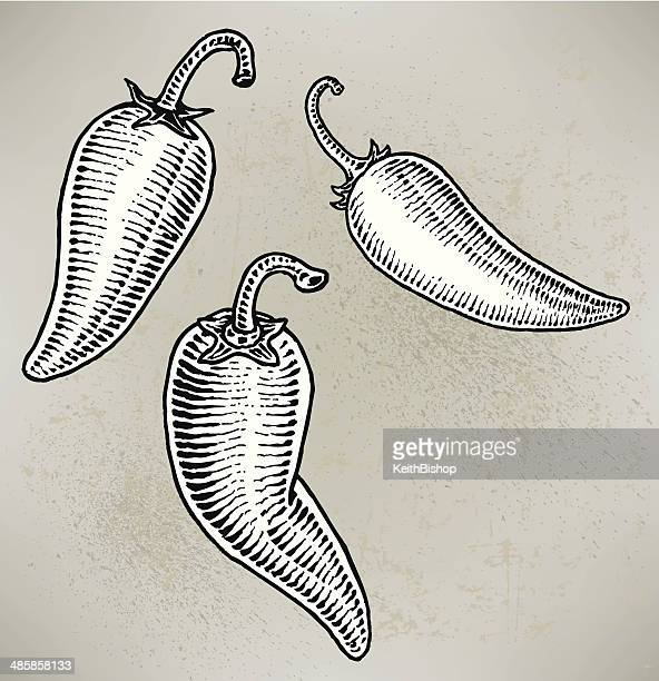 jalapeno peppers - jalapeno pepper stock illustrations