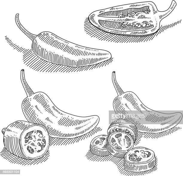 jalapenos drawing - pepper vegetable stock illustrations