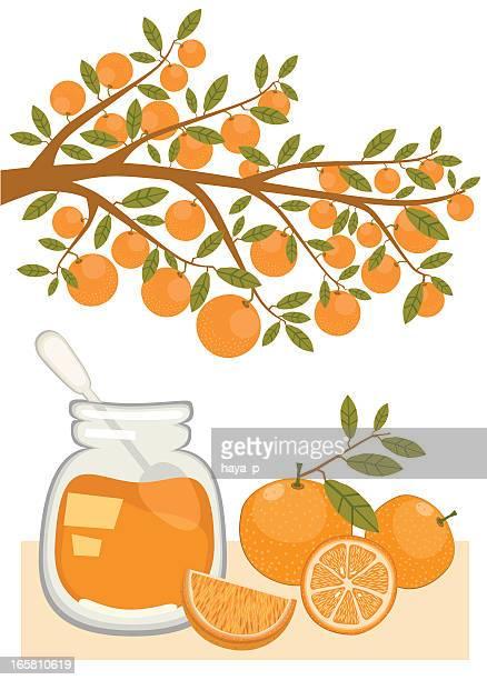 jam and oranges - marmalade stock illustrations, clip art, cartoons, & icons