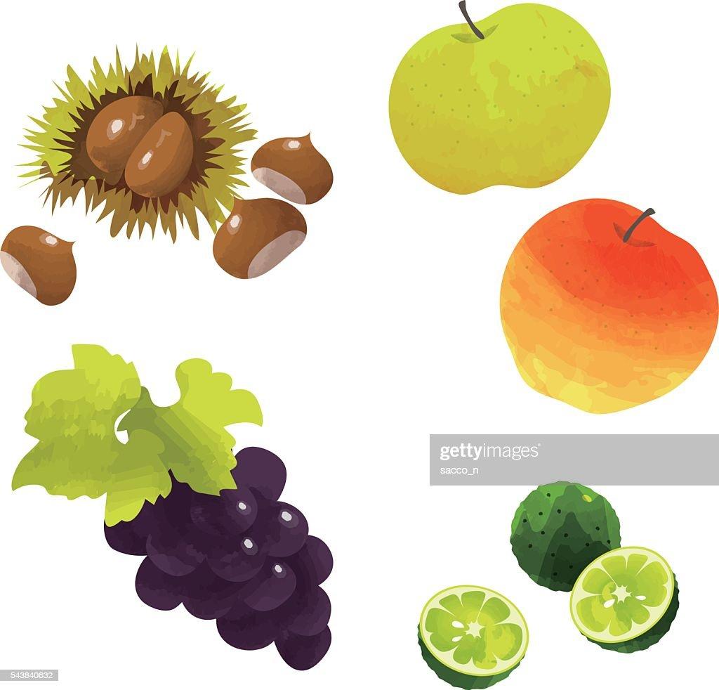 japanese autumn fruits