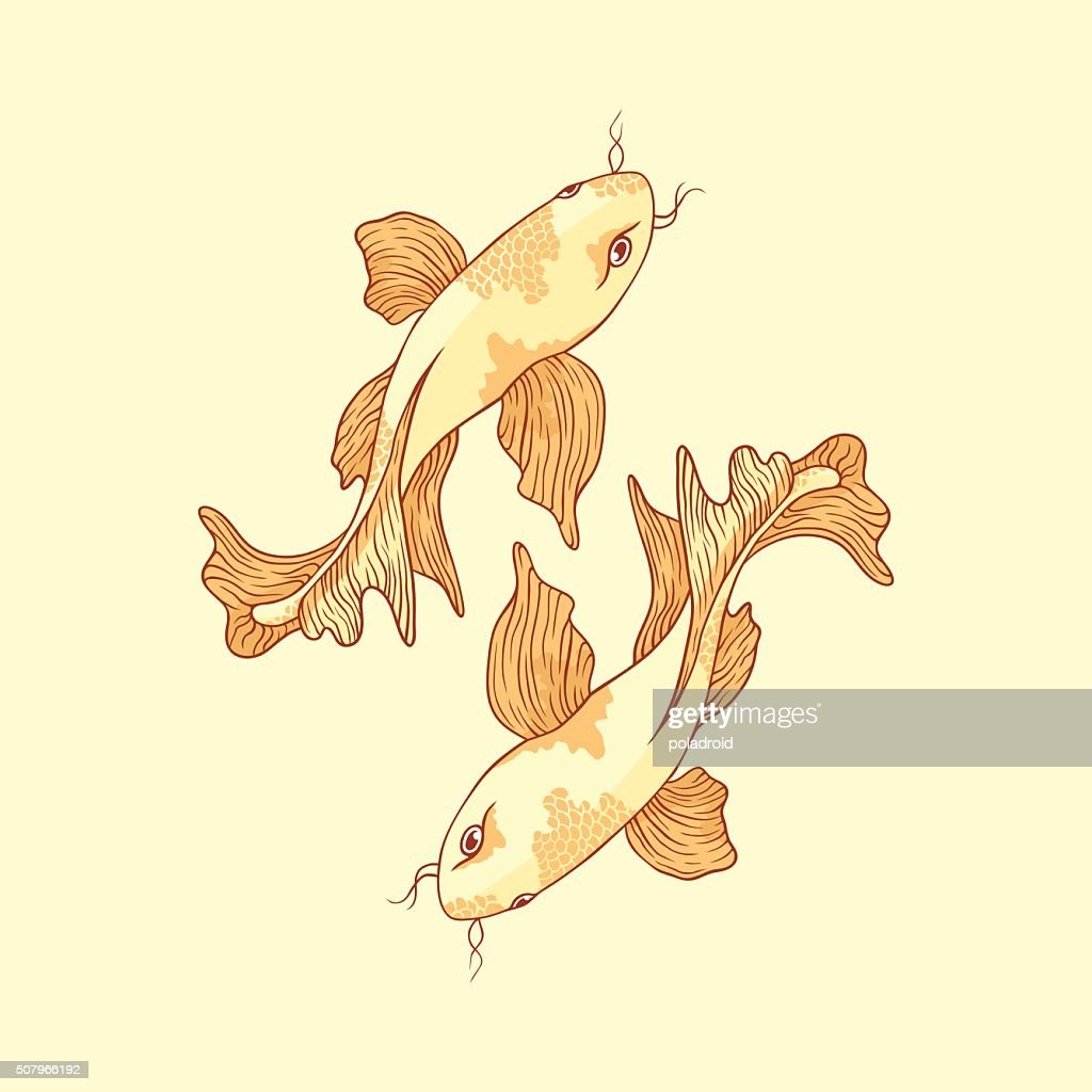 Japanese carp koi