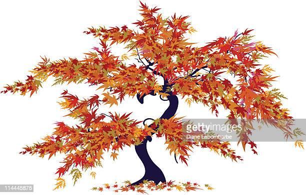 japanese maple tree - japanese maple stock illustrations