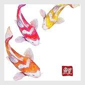 Japanese watercolor carps koi swimming. Calligraphic simbol