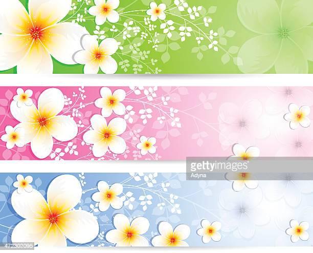 jasmine banner - jasmine stock illustrations