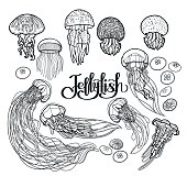 Jellyfish in line art style