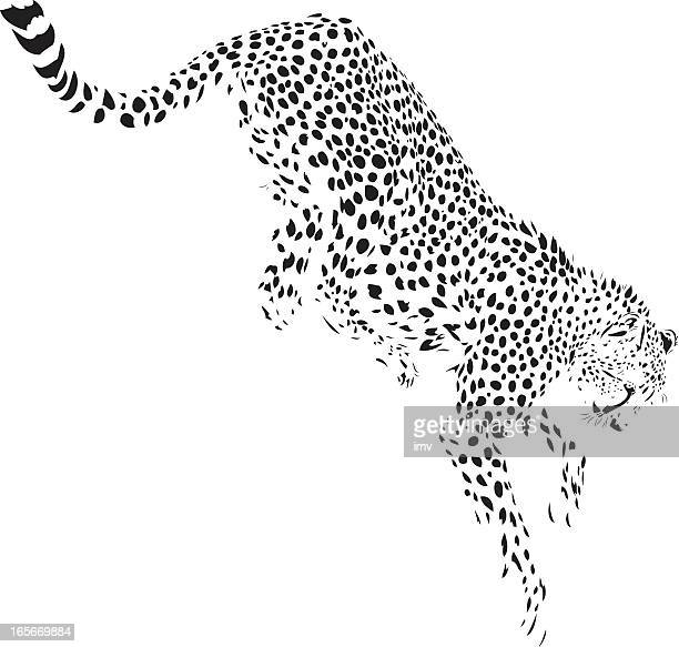 Jumping cheetah illustration