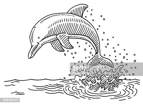 Jumping Dolphin Sea Water Splash Drawing Vector Art