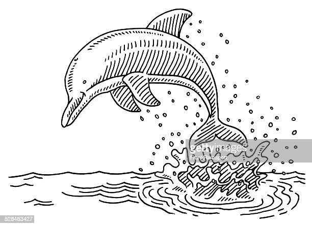 Jumping Dolphin Sea Water Splash Drawing