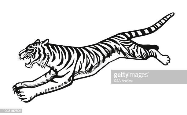 ilustraciones, imágenes clip art, dibujos animados e iconos de stock de salto del tigre - tigre