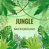 Jungle background. Jungle trees and plants.