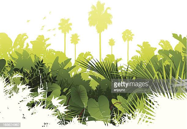 illustrations, cliparts, dessins animés et icônes de fond de la jungle - jungle